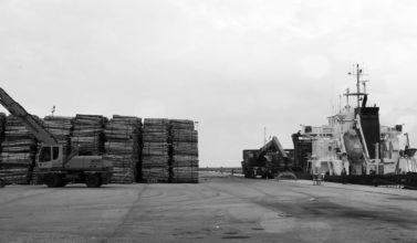 burela port - loading eucalyptus logs